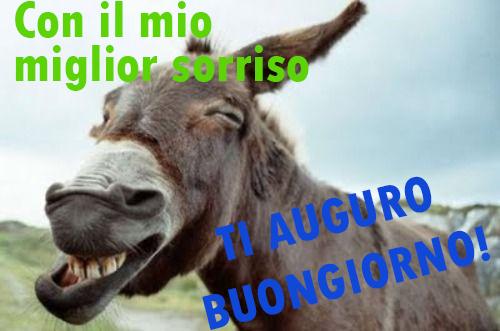 Augurare buongiorno in modo divertente for Foto buongiorno gratis