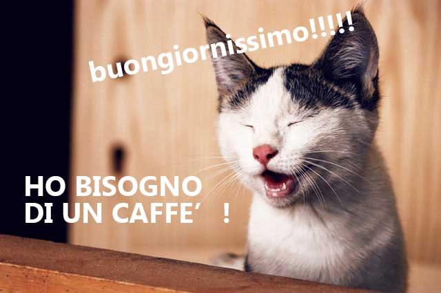gatto-buongiorno